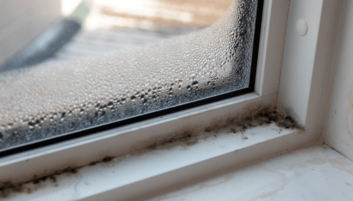 The Top Five Myths About Mold
