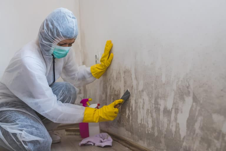 Utah Mold Cleanup Services