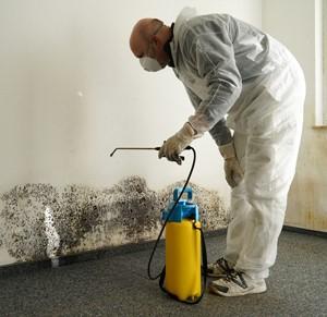 Utah Mold Remediation Company
