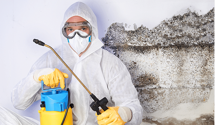5 Reasons Why You Should Hire a Professional to Deal with Mold