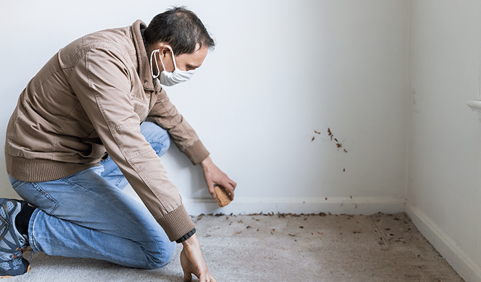 Mold Removal: What To Do About Mold in Your Carpet?