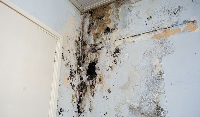 Can Mold Cause Illnesses