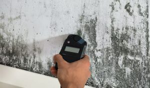 6 Things About Mold You May Not Know